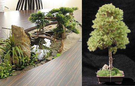Настольная композиция с деревом бонсай