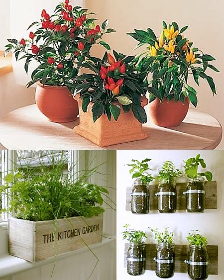 Выращивание трав в квартире