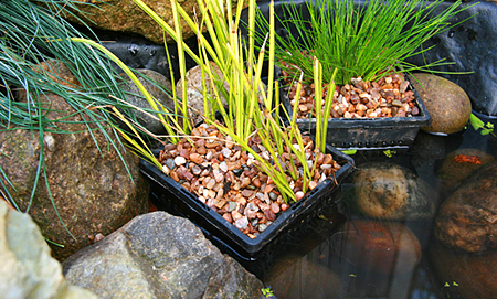 Висадження рослин в штучний ставок.