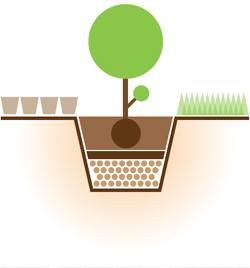Деревья и кустарники для живой изгороди