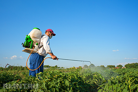 Органическое земледелие. Биологическая защита от вредителей и сорняков