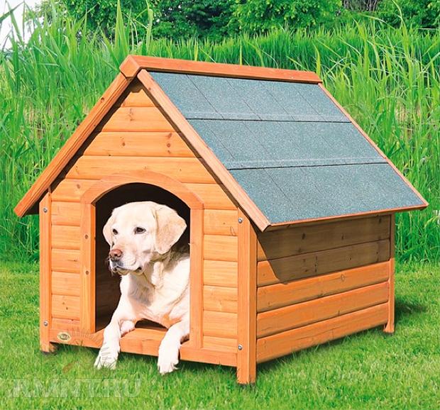 Если в доме собака- обустраиваем уголок для домашнего питомца RMNT.RU