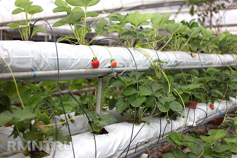 Выращивание зеленых на гидропонике 490