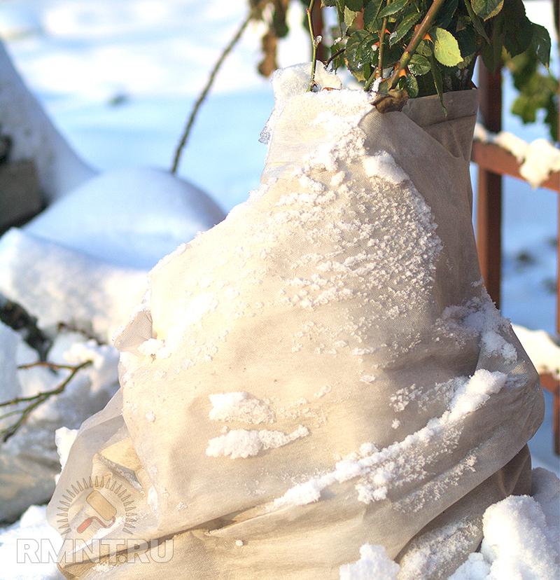Уход за садом зимой. Защита от морозов и грызунов