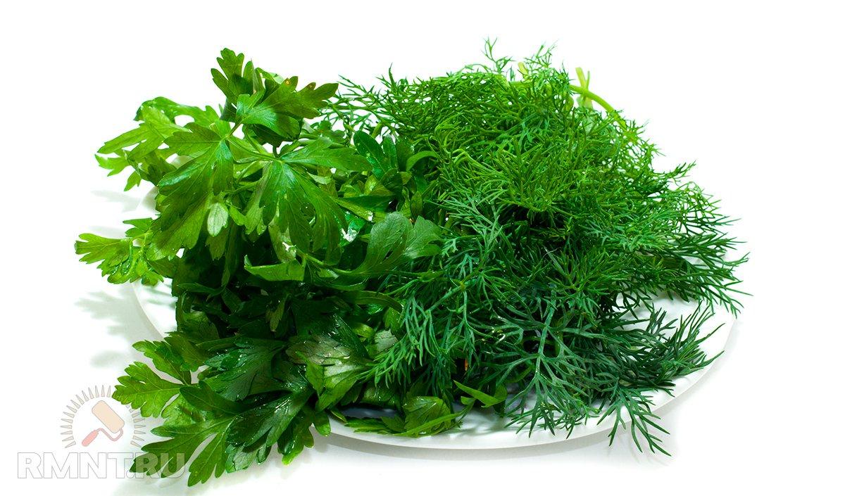 Делаем запасы зелени на зиму