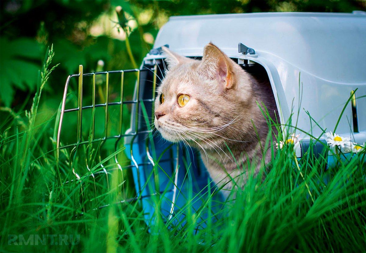 Животные на даче: как обеспечить комфорт и безопасность