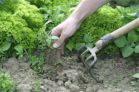 как бороться с сорняками на моркови