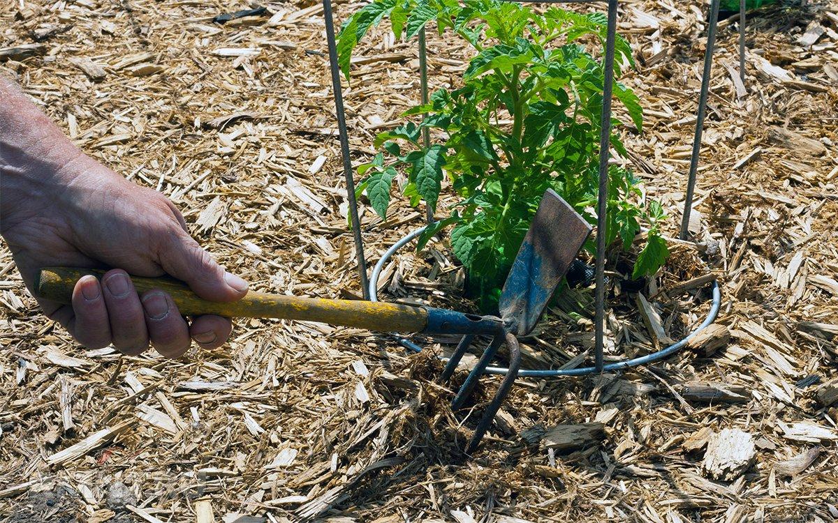 Органическое земледелие: основные особенности