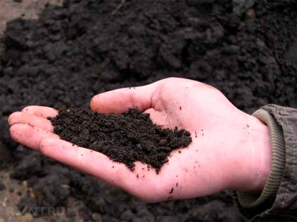 Как определить особенности почвы на участке