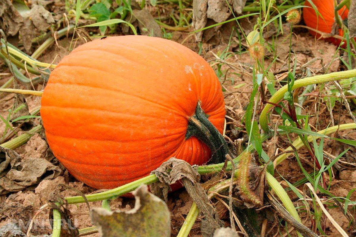 Осенний календарь садовода и огородника