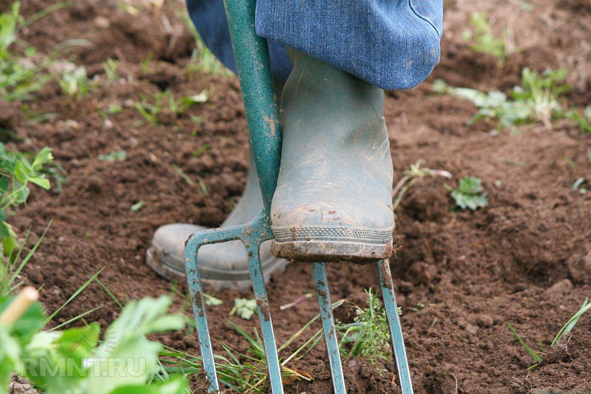 Органическое земледелие: дождевые черви — основной индикатор плодородия