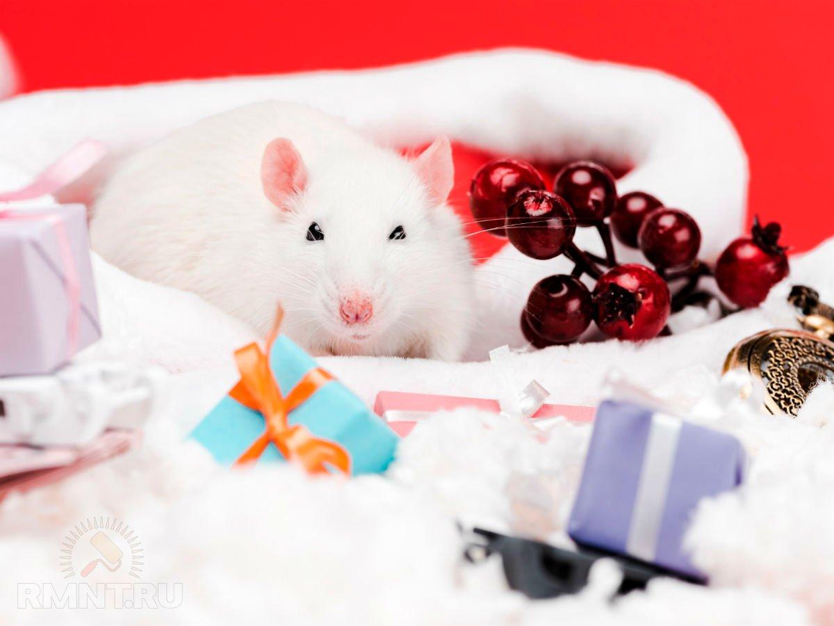 Готовимся встречать 2020 — год Белой крысы