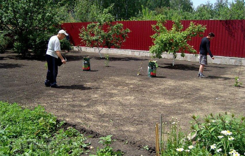 Как посадить газонную траву на даче своими руками 41