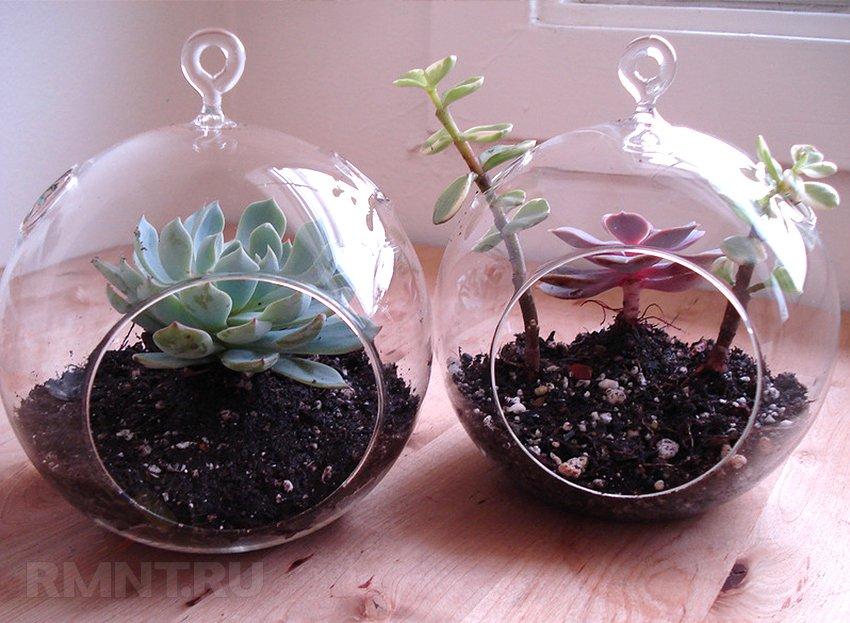 Флорариум — «зелёное царство» за стеклом