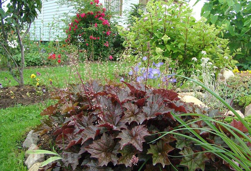 Клумба своими руками. Советы по подбору растений и практическое руководство по обустройству