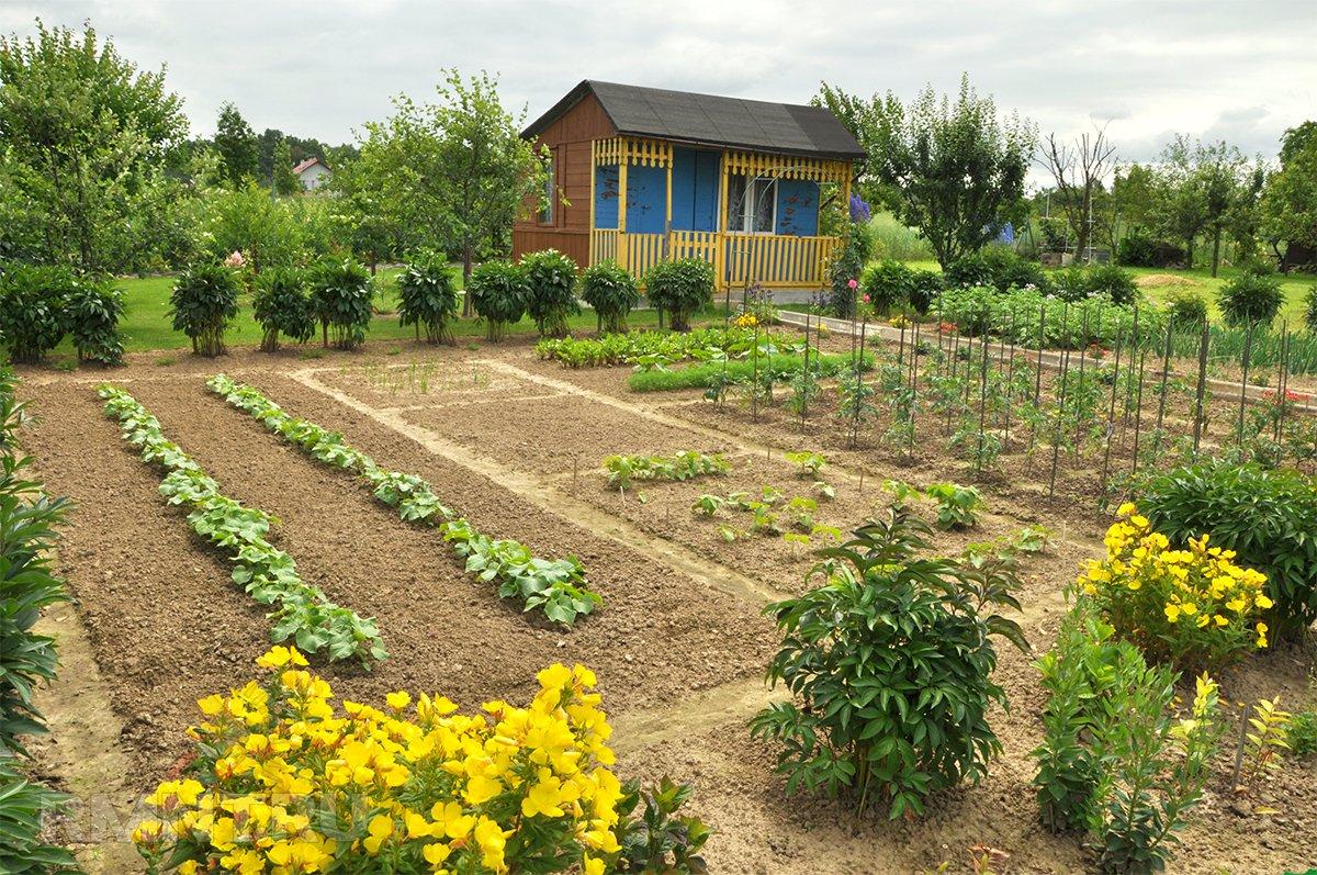 Ухоженный огород