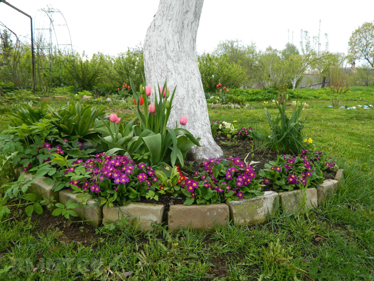 Что сажать осенью на даче: 7 советов огородникам (38 фото) 45
