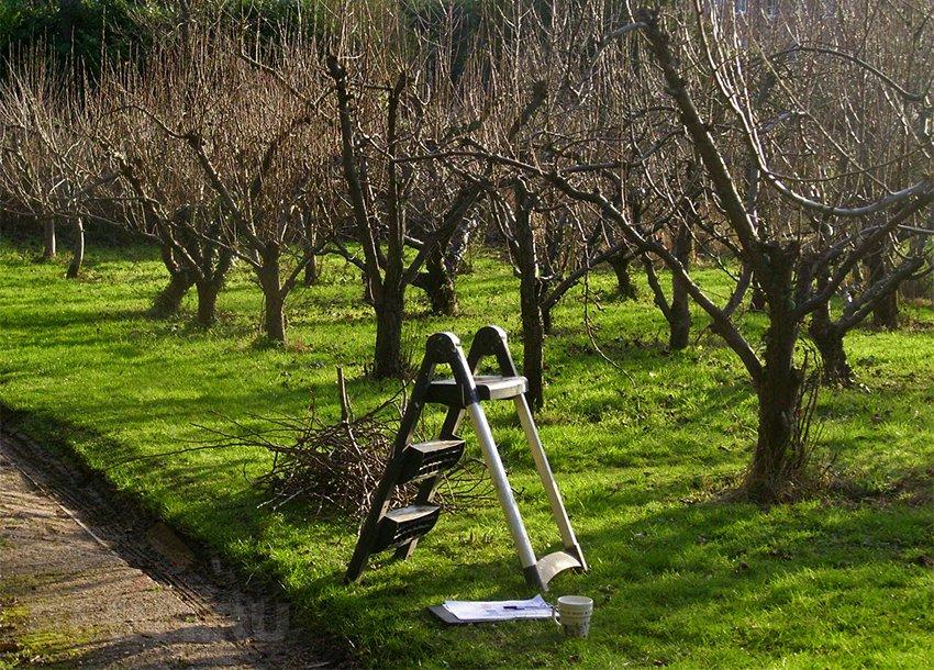 Осенняя обрезка яблони, груши и плодовых деревьев