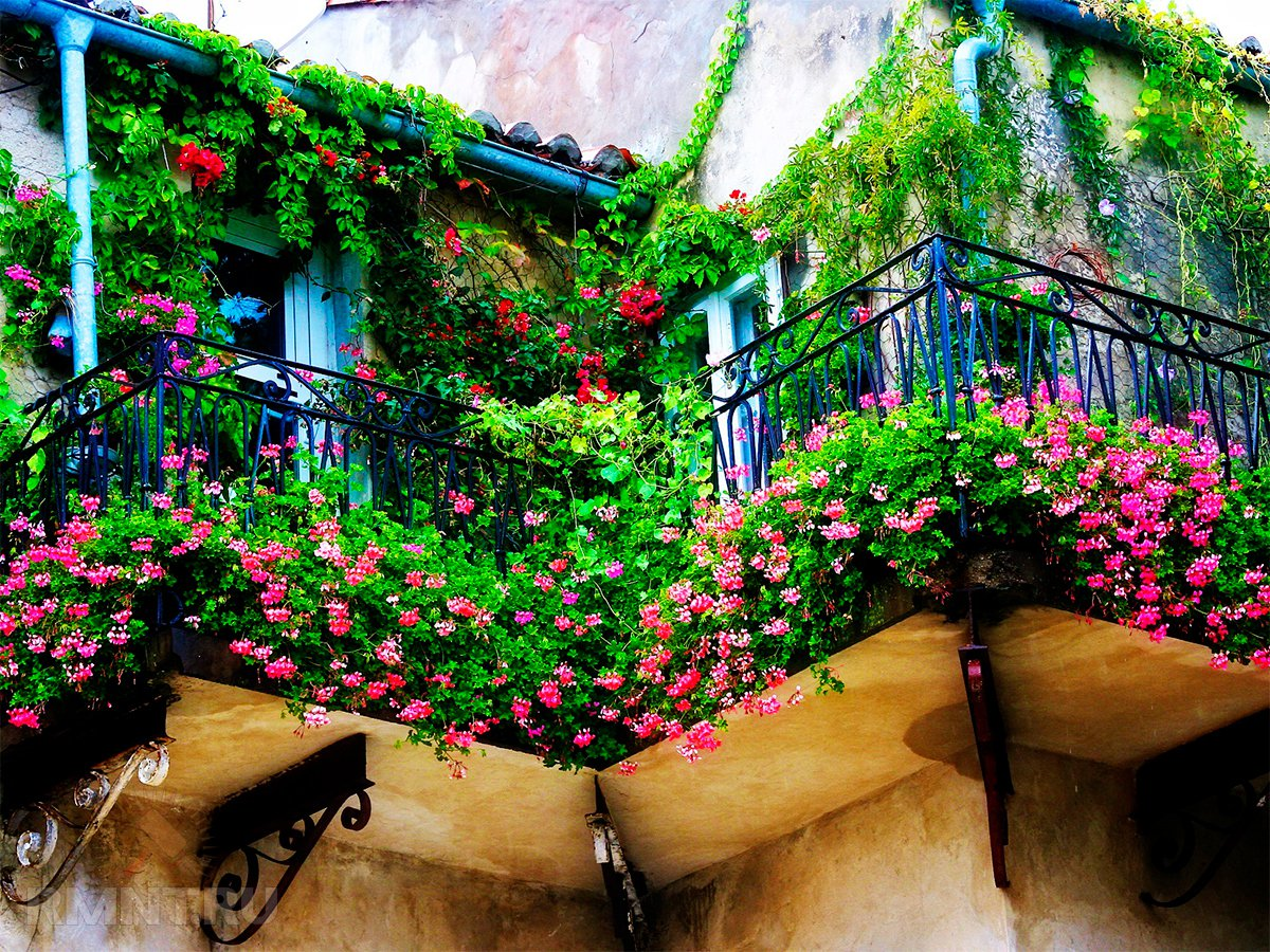 Красота под балконом