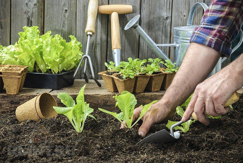 Что и как сажать в саду 92