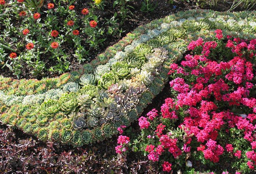 Когда сажать цветы что все лето цветут 534