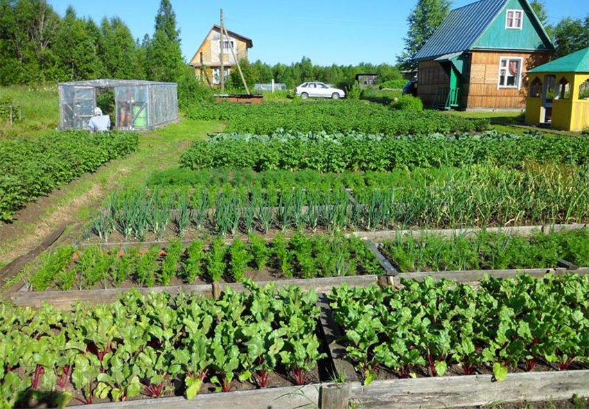 Когда сажать на огороде овощи 32