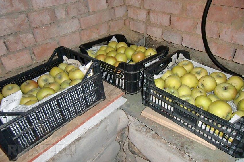 Хранить яблоки в домашних условиях