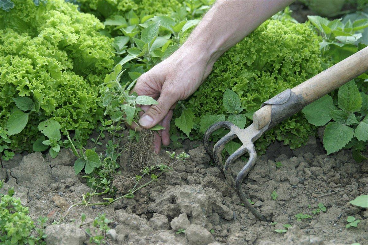 Борьба с сорняками: как не проиграть битву за огород