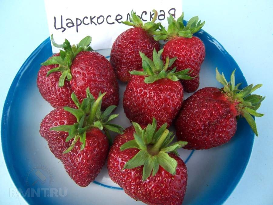 Клубника Царскосельская