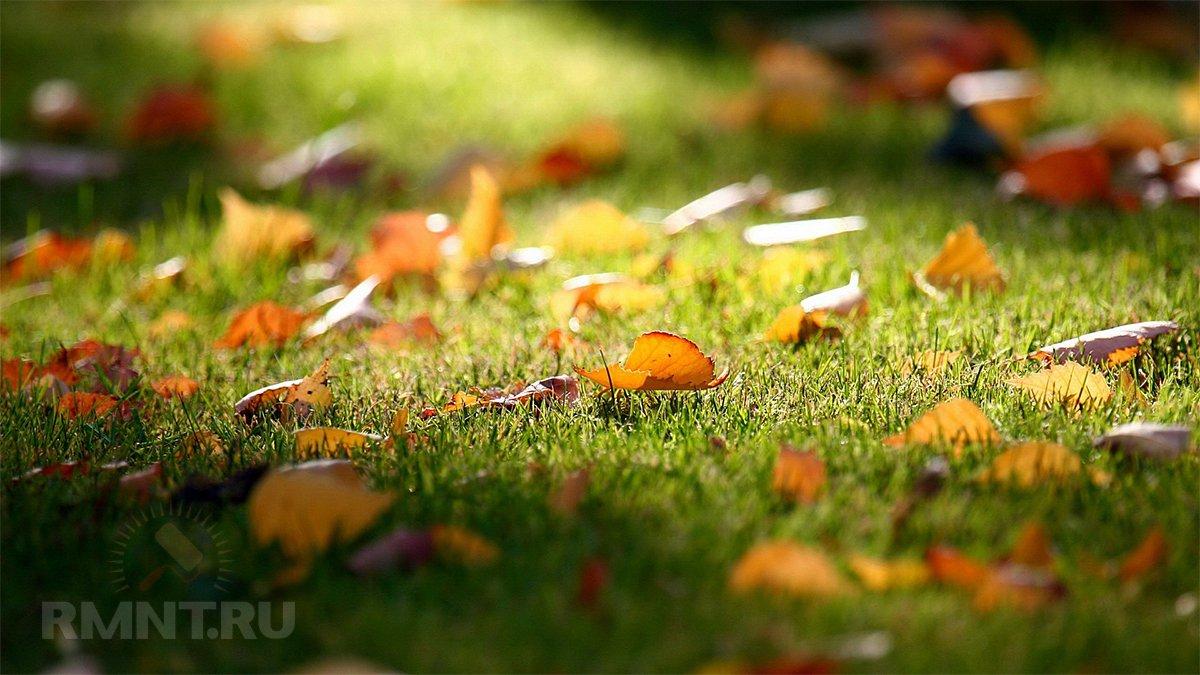 Что делать с опавшими листьями на участке