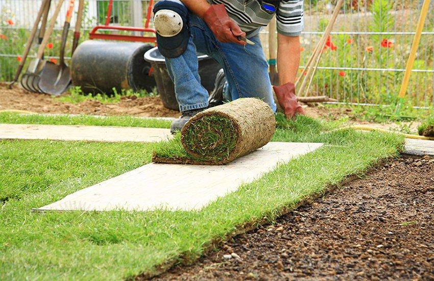 Как создать газон своими руками