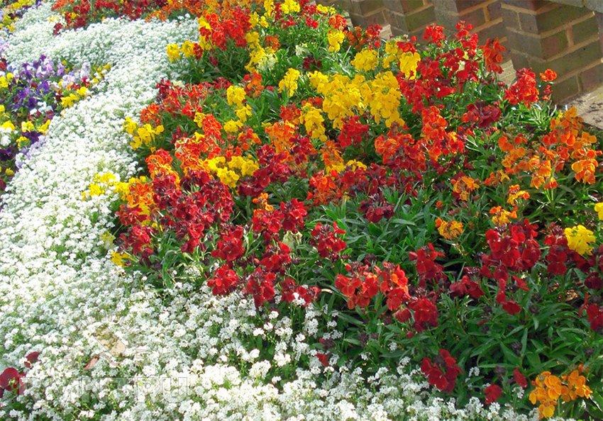 Клумбы и цветники — от основ