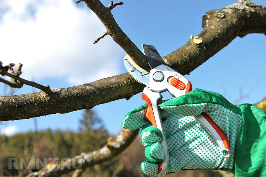 Обрезка и формировка деревьев своими