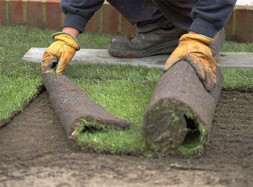 Технология выращивания рулонный газон 81