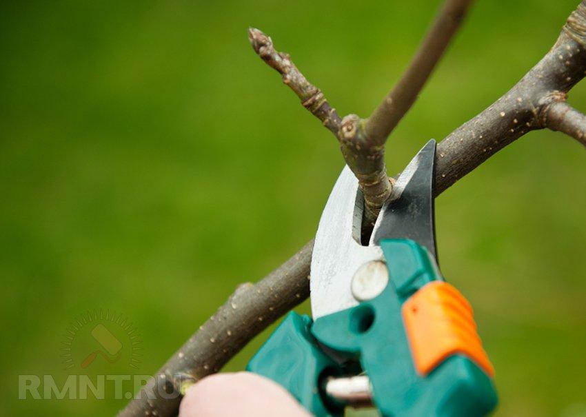 Обрезка и формировка плодовых деревьев своими руками
