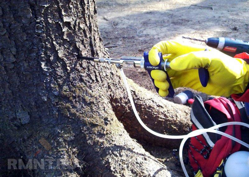 Жуки-короеды, шашели, термиты. Как бороться с вредителями древесины