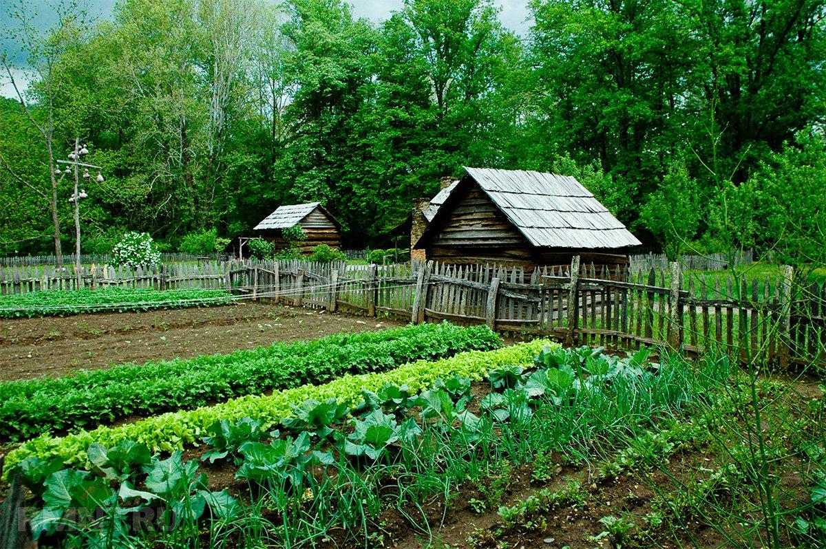 Что можно посадить в огороде в середине лета