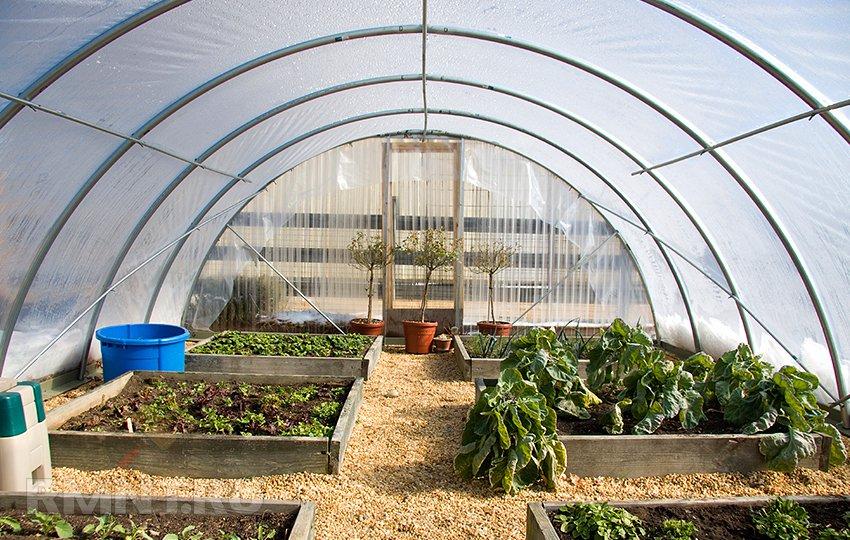Декоративные растения для обогреваемых холодных теплиц