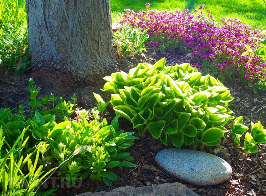 Растения любящие тень и растущие под деревьями