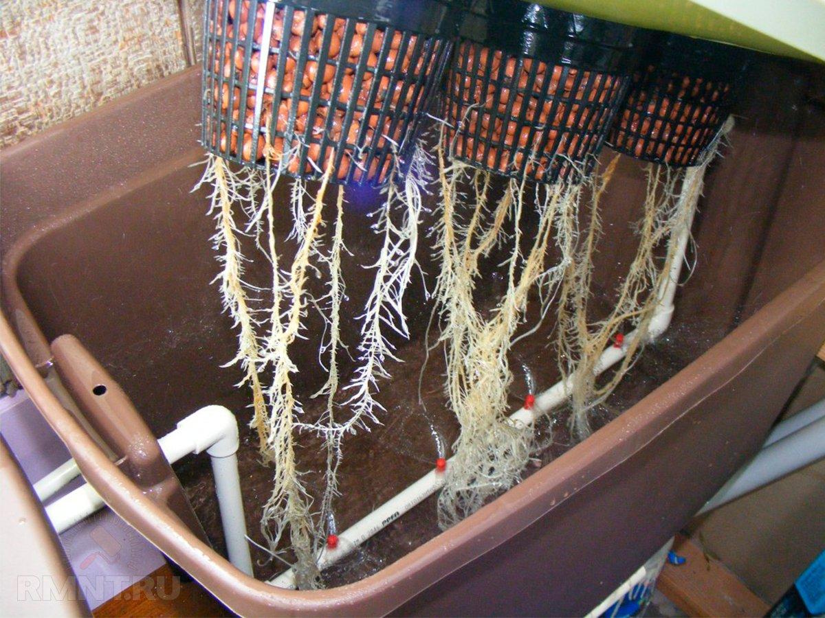 Гидропоника: бытовые установки для выращивания цветов, зелени и овощей
