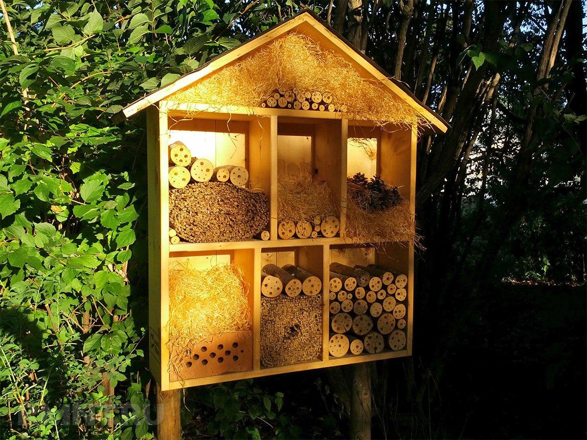 Улей для диких пчел