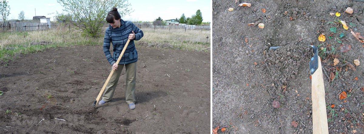 Рыхление почвы плоскорезом Фокина