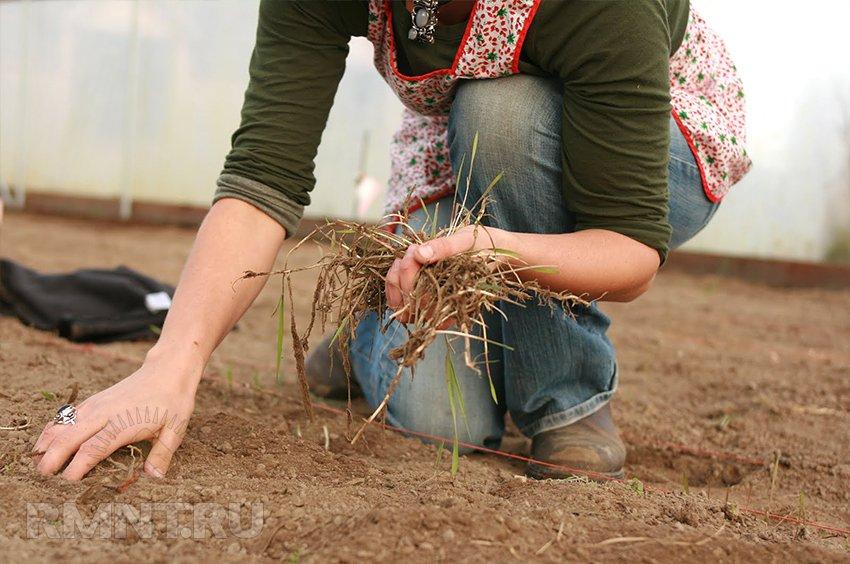 Как подготовить землю в парнике к зиме