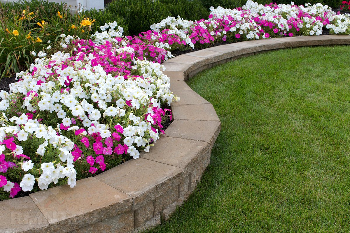 Бордюрные цветы для дачи: список многолетних растений с фото