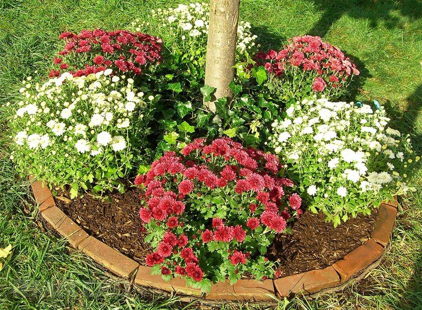 Уличные цветы которые сажают осенью 63