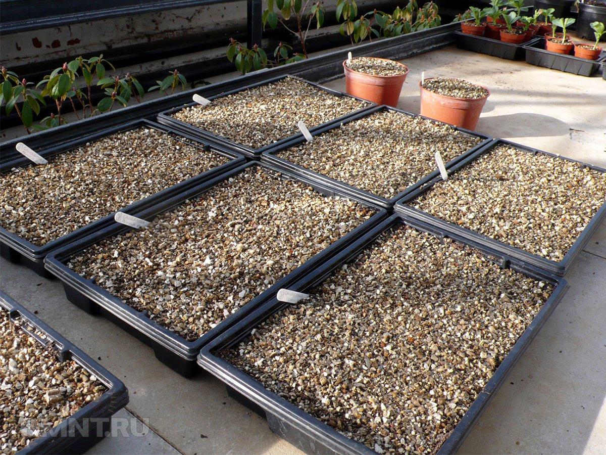 Агровермикулит для растений