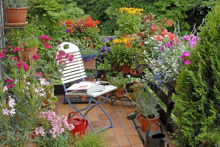 Сад на балконе своими руками 372