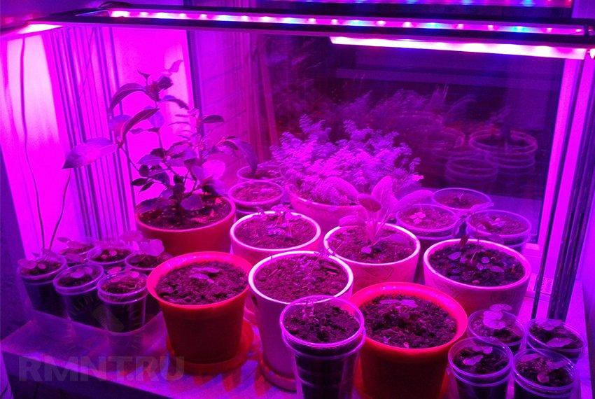 Лампа для домашнего выращивания растений 14