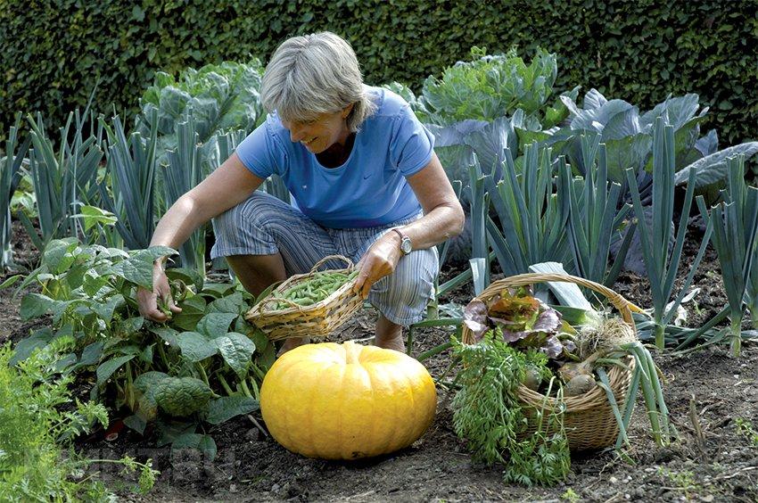 Картинки грядки с овощами, открытки день рождения