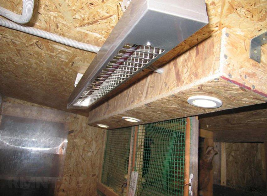 уход за курицами на даче